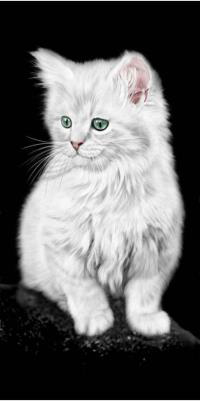White_Cat_6106.png